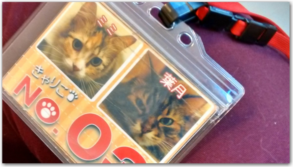 cat cafe id badge tokyo