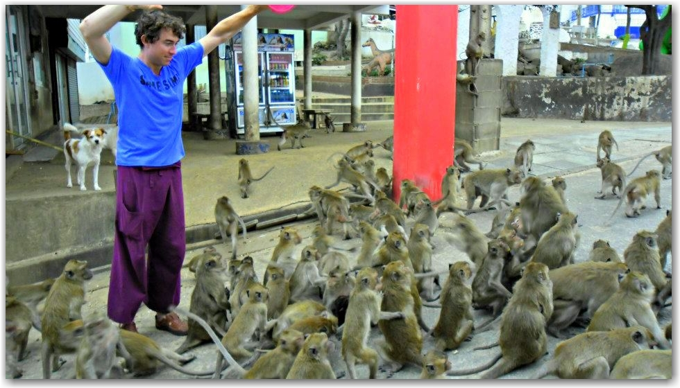 feed monkeys in thailand