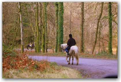 riding horses in Snowdonia, North Wales