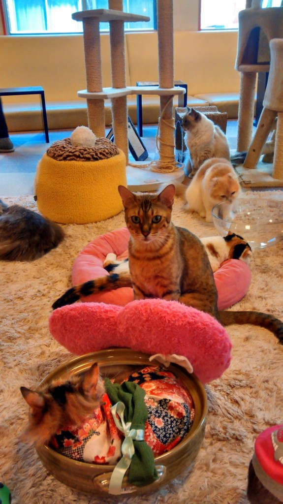 The Strange World of Tokyo's Animal Cafes
